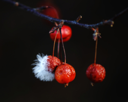 Райские яблони