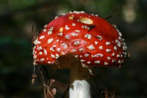 Веселый грибочек