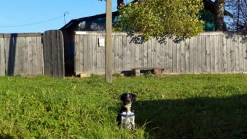 старый забор, старый ящик и верный пёс