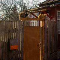 Почтовый ящик , дверь и две кошки