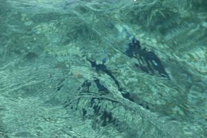 кто под водой?