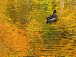 Золотая речка