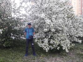 Беласнежная яблони