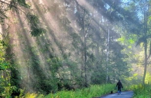 В потоке солнечного света, по тропинке ты идешь..