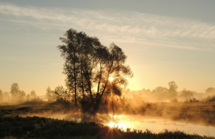 Волшебство туманного утра
