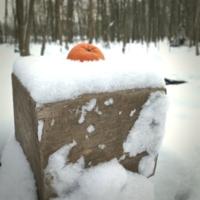Мандариново-зимняя/untitled
