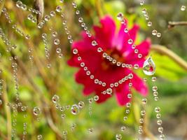 Водное ожерелье