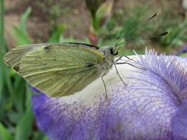 Схожесть фактур цветка и бабочки