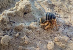 Песок и его обитатель