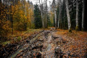 По лесным дорожкам