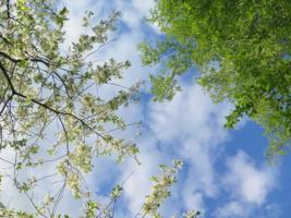 Весеннее небо.