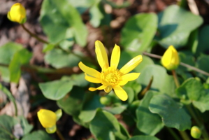 Первые цветочки