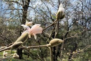 Цветок на ветке