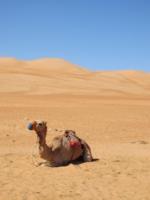 транспорт пустыни