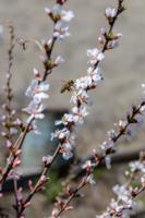 Весна в моем городе.