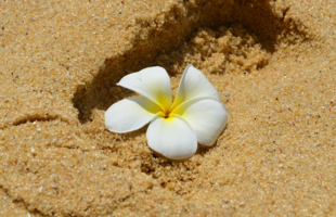 Цветы на песке