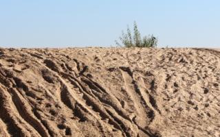 Куст, растущий на песке