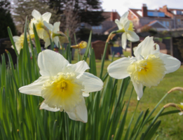 Весна на кладбище.