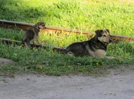 Колея собачьей жизни