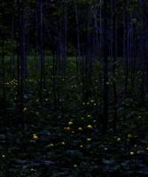 Майская ночь