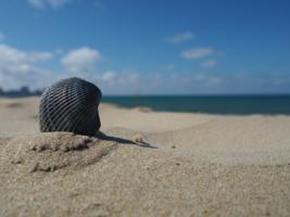 """""""На брег песчаный и пустой..."""""""