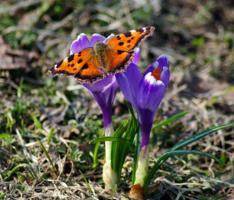 Апрельская бабочка