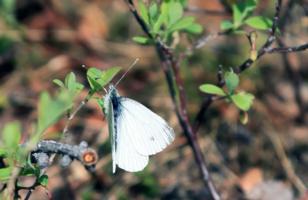 Бабочки прилетели.