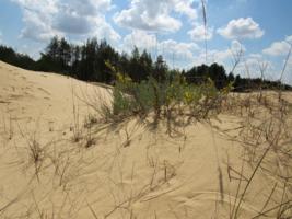 И на песках расут цветы