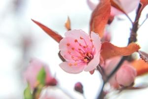 Цветет, но не плодоносит