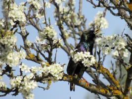 Поющая весна