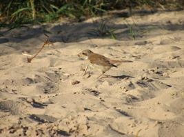 В песке тоже можно найти, что-нибудь сьедобное.