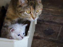 Твоя цель - обязательно поймать эту мышь, малыш!
