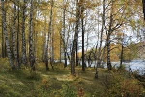 Осенью на берегу Катуни