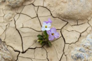 Камни пройденных дорог сумел пробить росток
