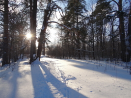 Зимняя радость.
