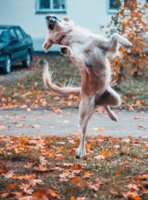 Танцевала в подворотне осень вальс Бостон...