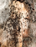 Броуновское движение муравейника