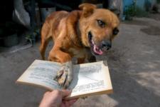Интересная книга? Дай почитать?