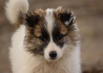 Бродячий щенок