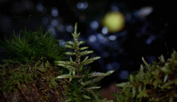 В лесу родилась елочка ...