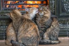 Тепло, уют и котики
