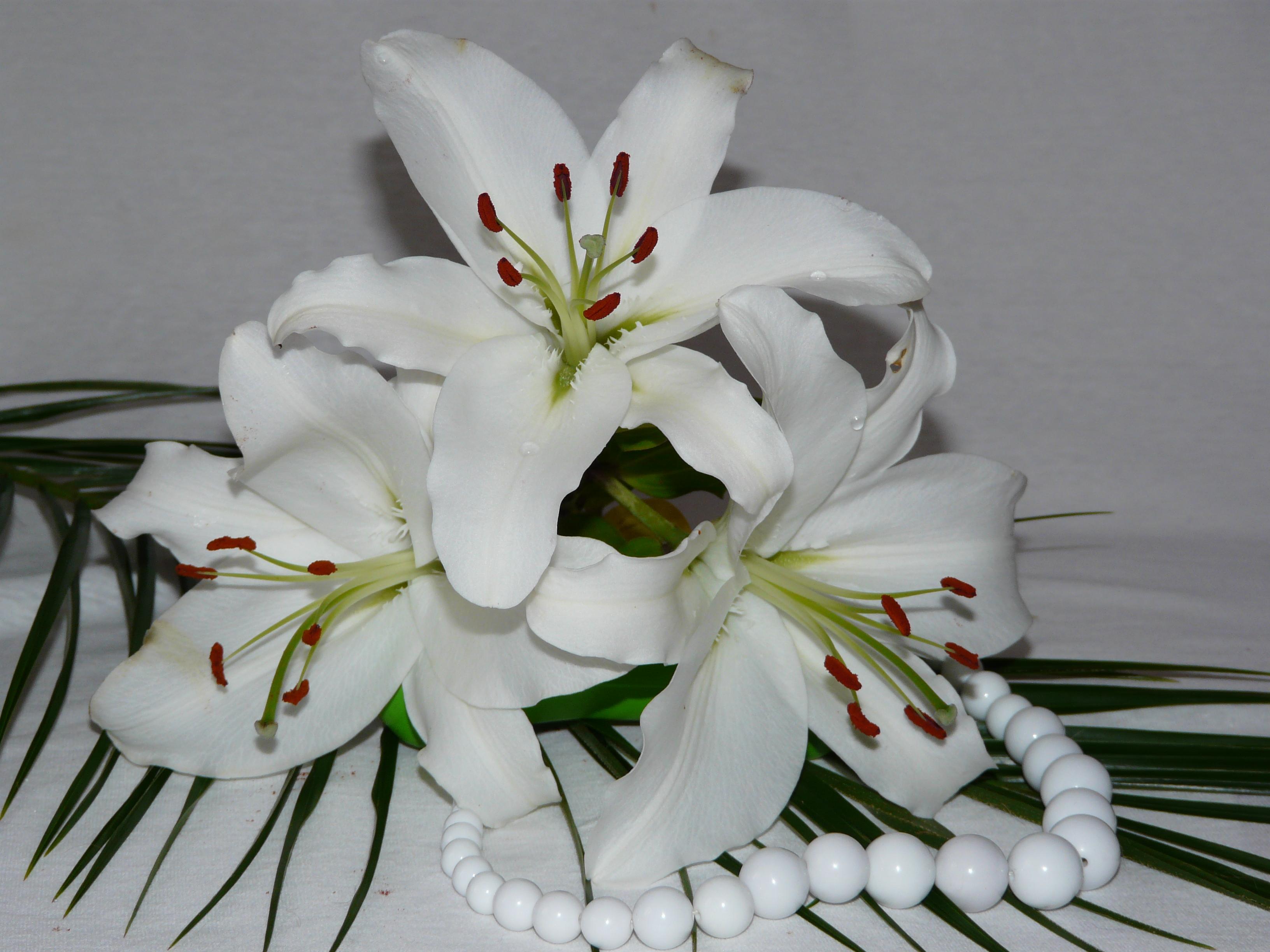 Белые лилии на день рожденья картинки