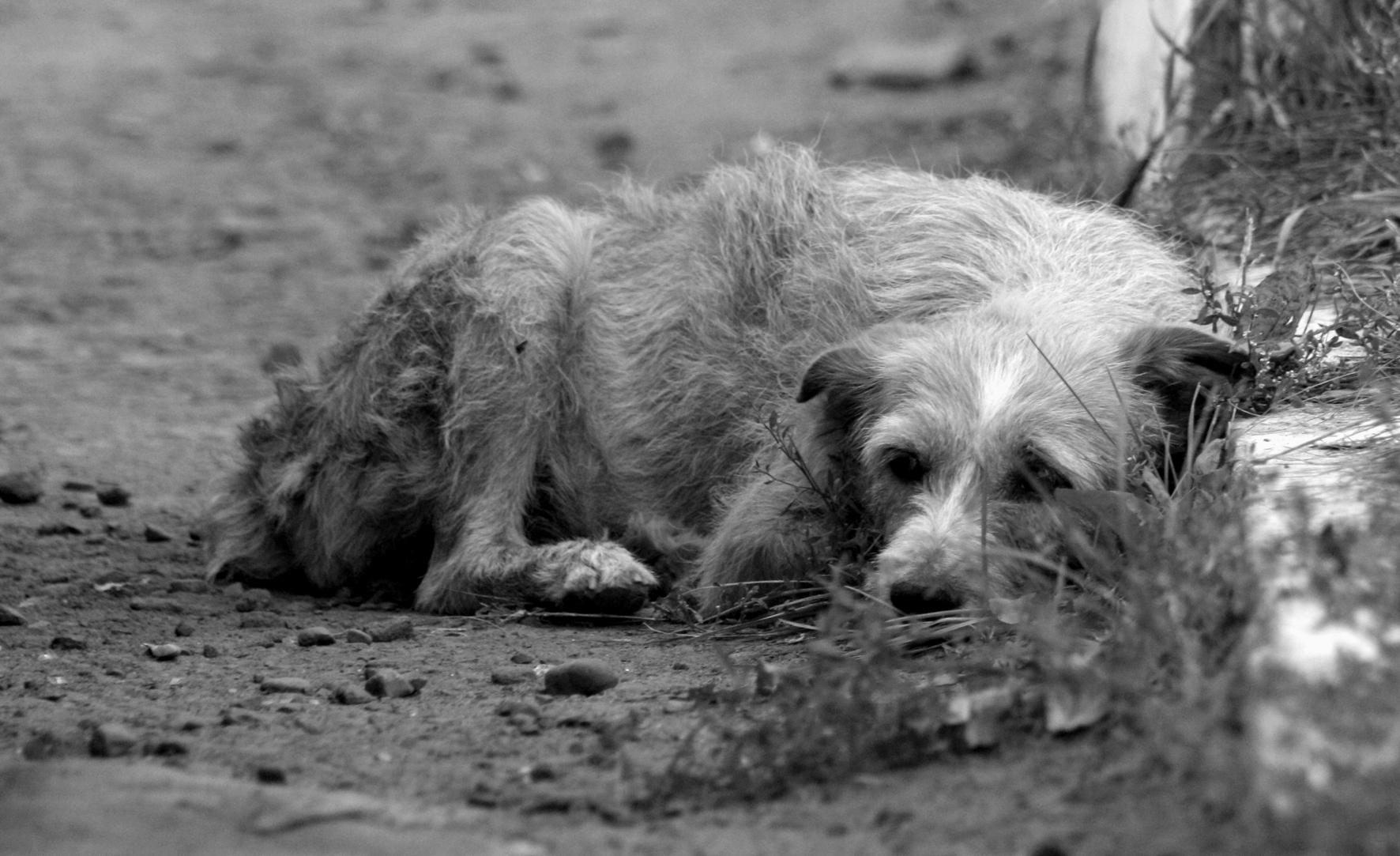 Прикольные картинки бездомных собак