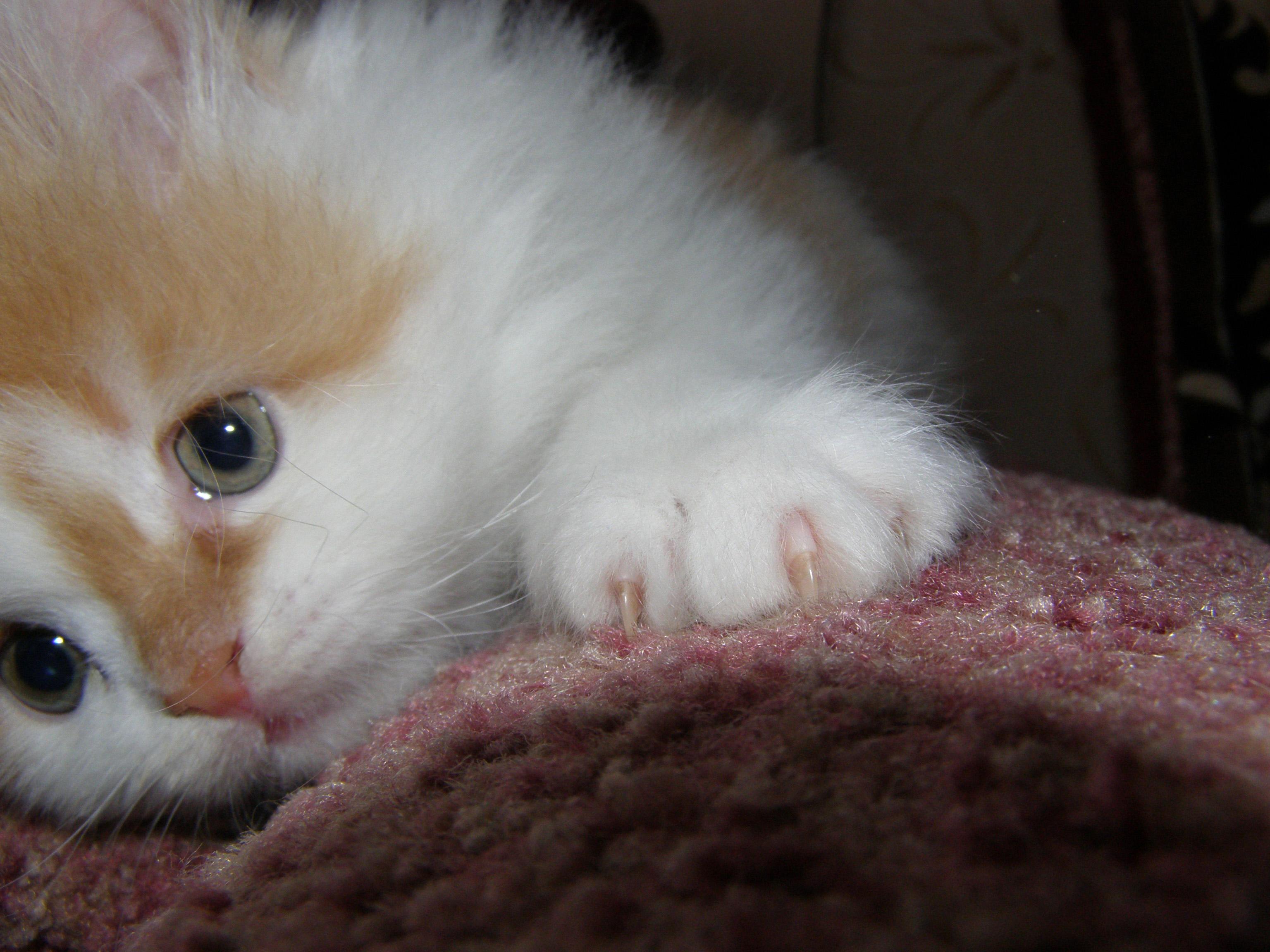 даю, картинки грустного плачущего котенка вообще можно