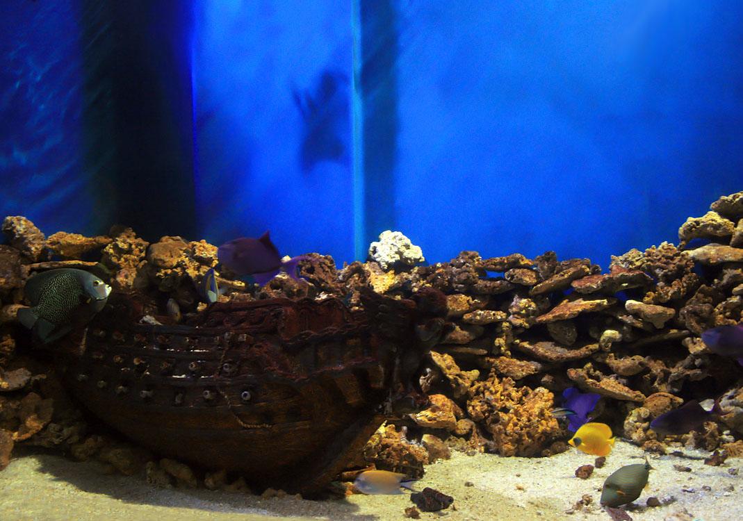 лиана картинки затонувших кораблей для аквариума чего артистка