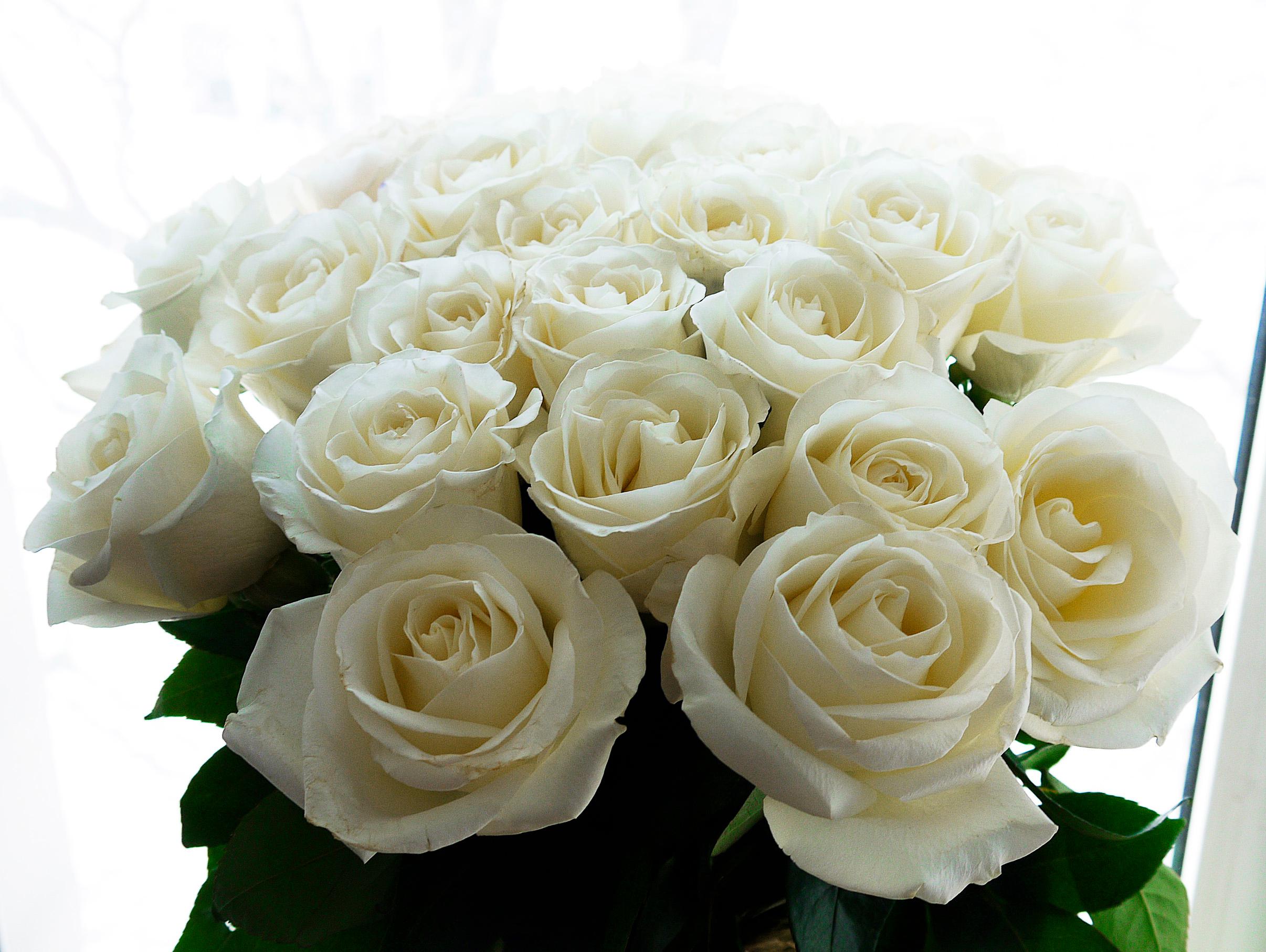 Открытки белые розы для любимой девушки, день