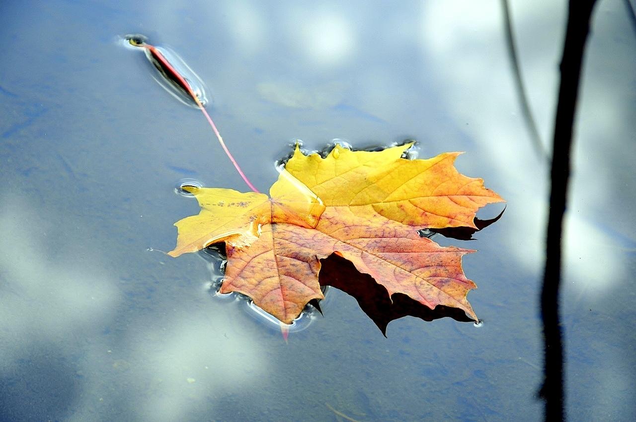 Картинка листья кружиться