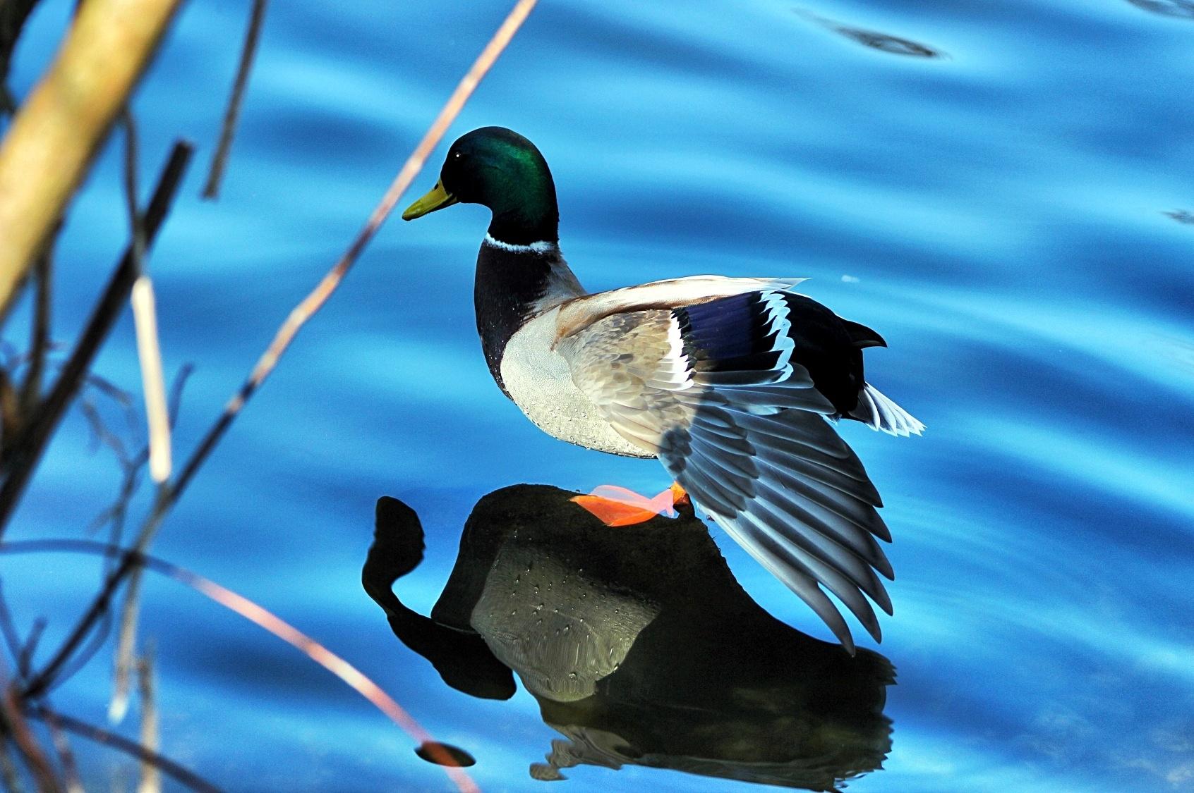 основном фотоконкурс птицы моего края затем
