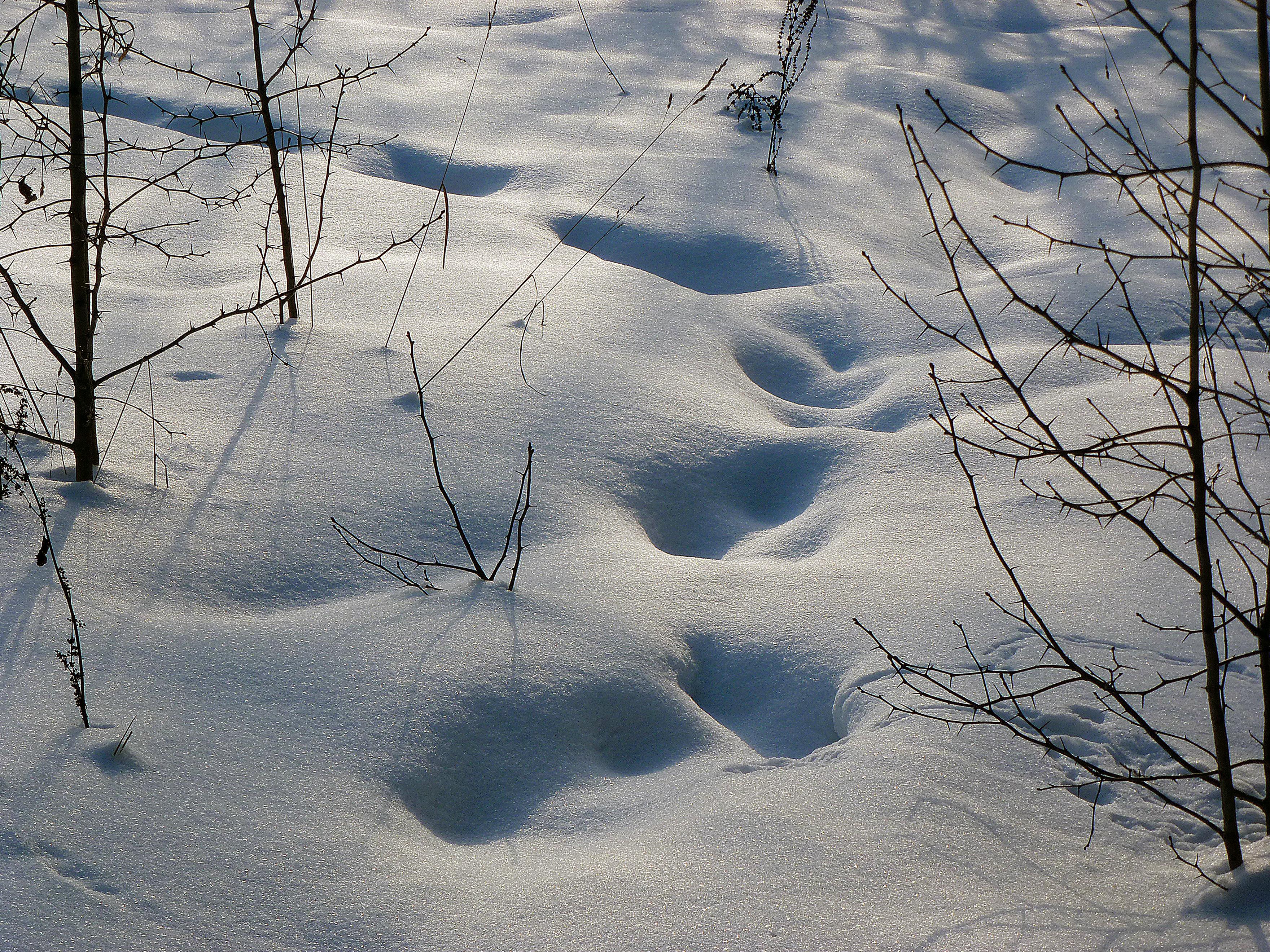 картинка снежные следы поливы подразумевают частый