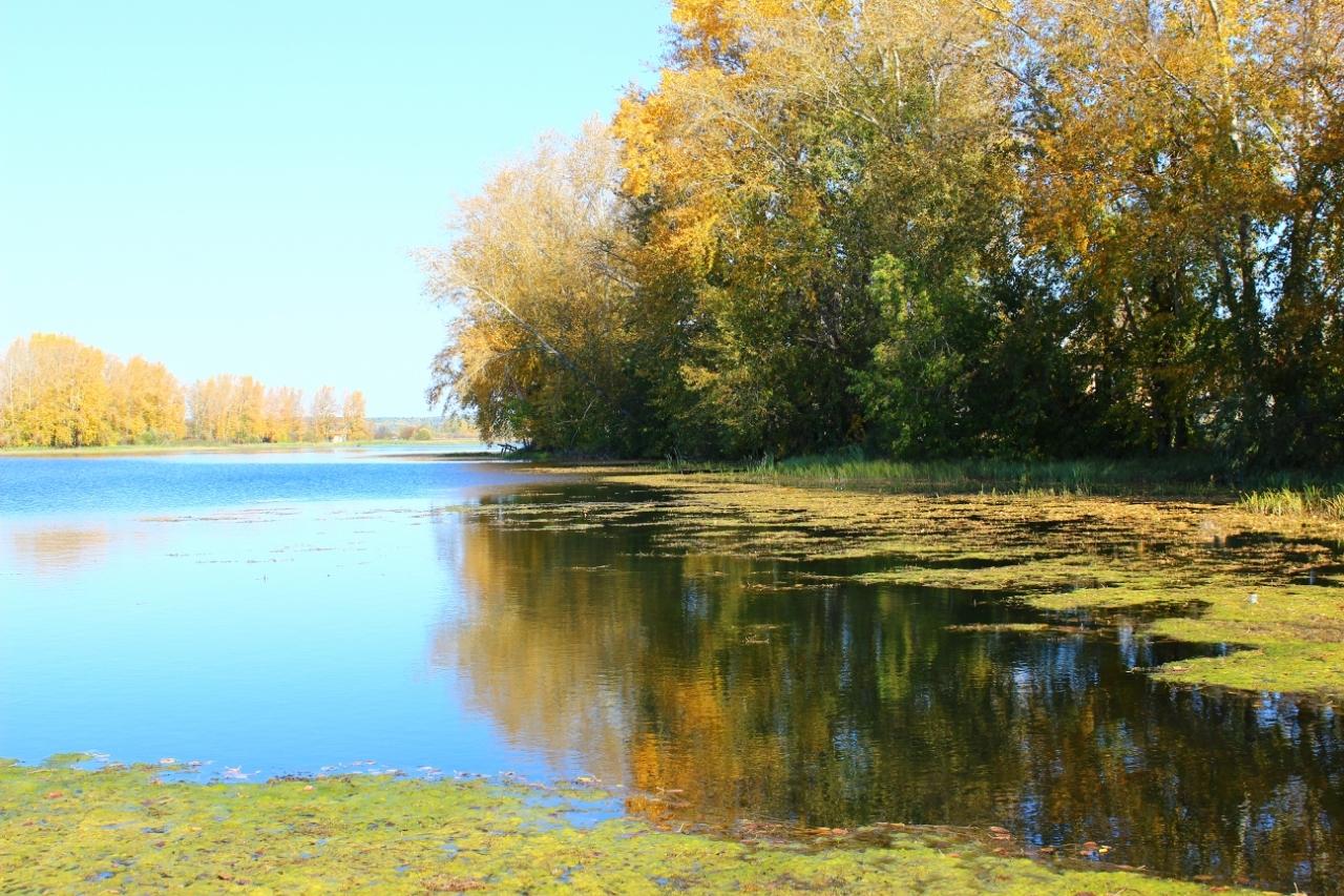 осень на пруду картинки что первом месте